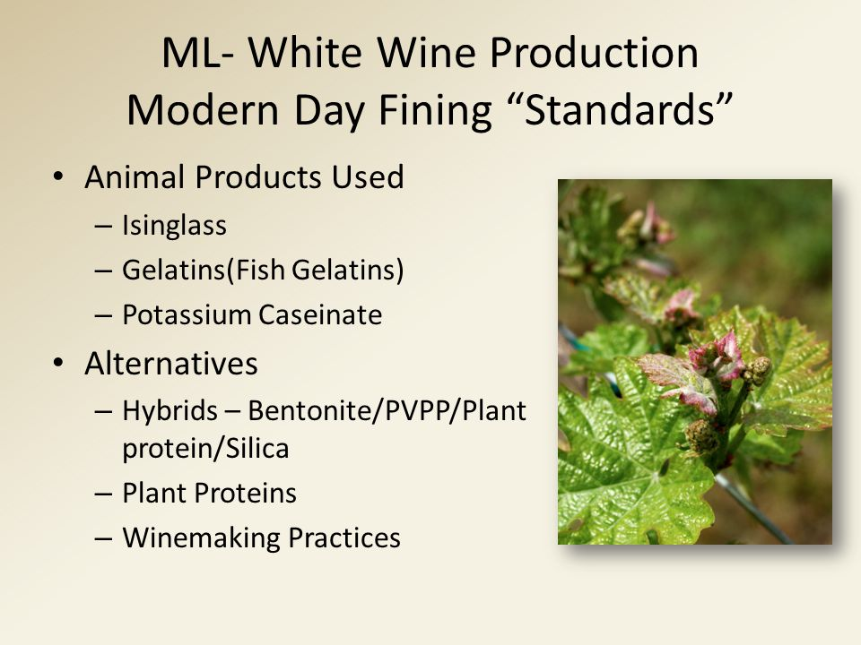 "ML- White Wine Production Modern Day Fining ""Standards"" Animal Products Used – Isinglass – Gelatins(Fish Gelatins) – Potassium Caseinate Alternatives"
