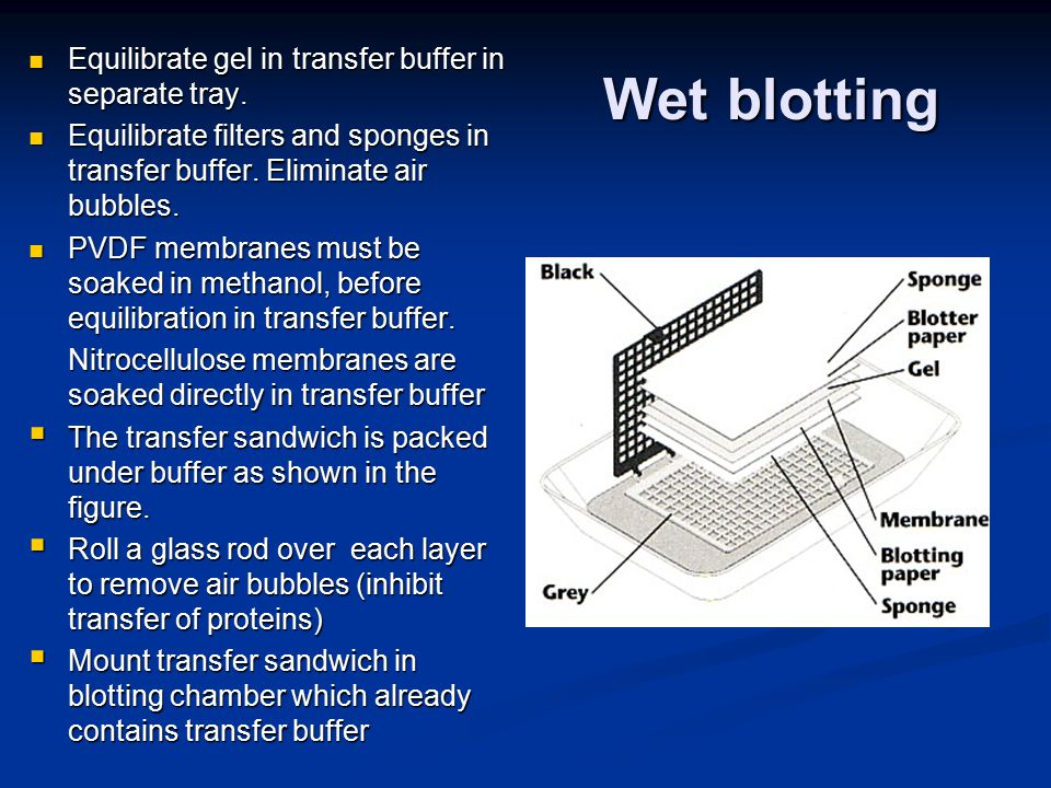 Wet blotting Equilibrate gel in transfer buffer in separate tray.