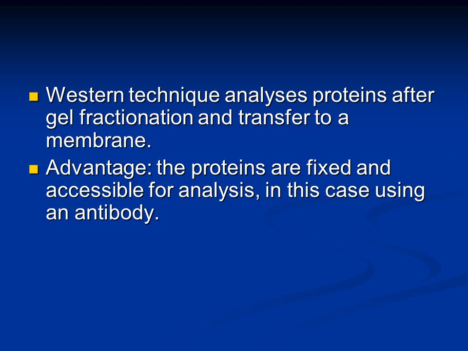 Western technique analyses proteins after gel fractionation and transfer to a membrane.