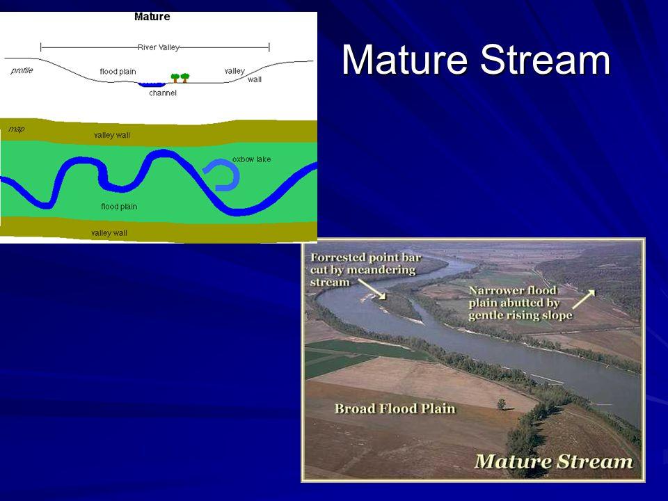Mature Stream Mature Stream