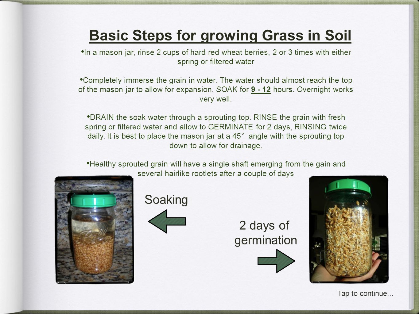 Basic Steps for growing Grass in Soil In a mason jar, rinse 2 cups of hard red wheat berries, 2 or 3 times with either spring or filtered water Comple