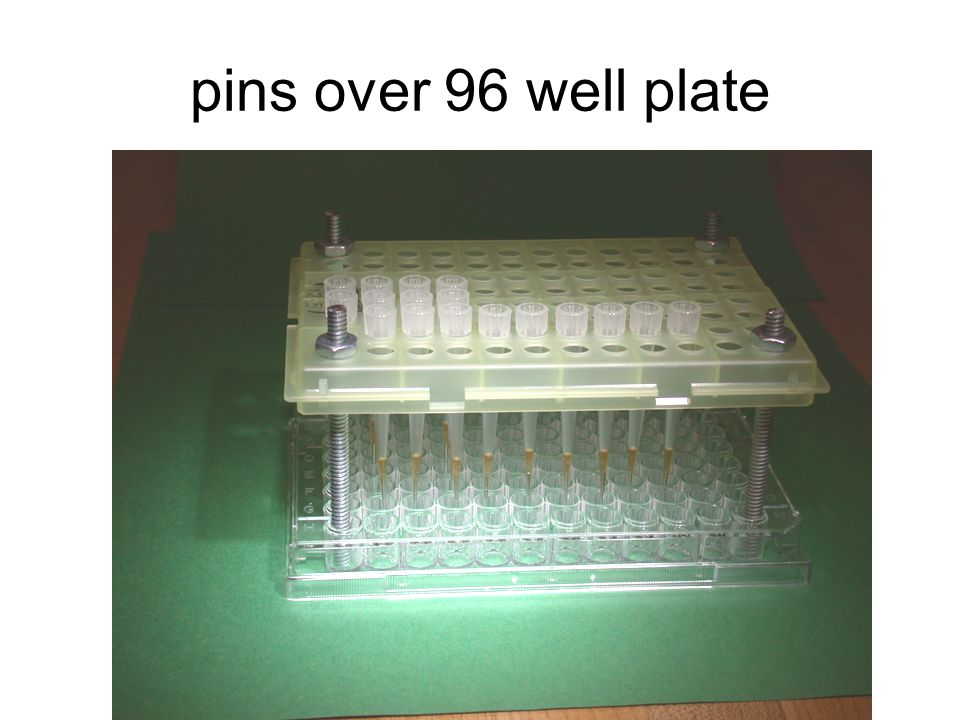pins over 96 well plate