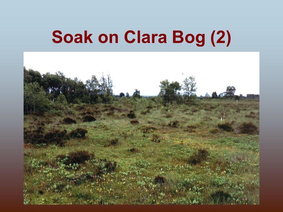 Soak on Clara Bog (2)