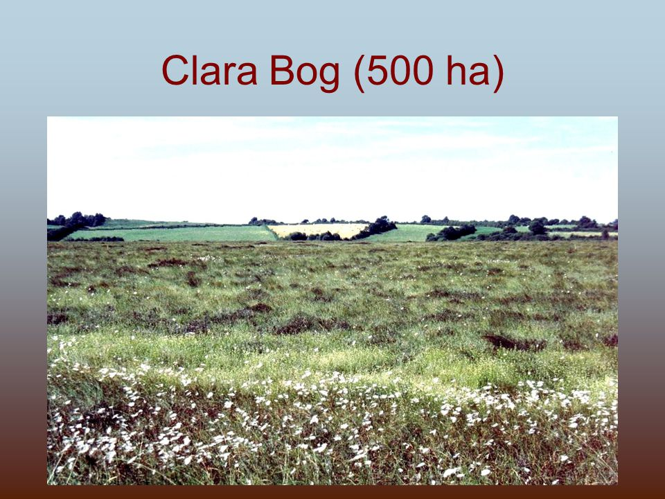 Clara Bog (500 ha)