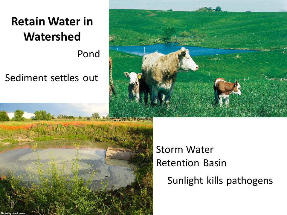 Retain Water in Watershed Storm Water Retention Basin Pond Sediment settles out Sunlight kills pathogens
