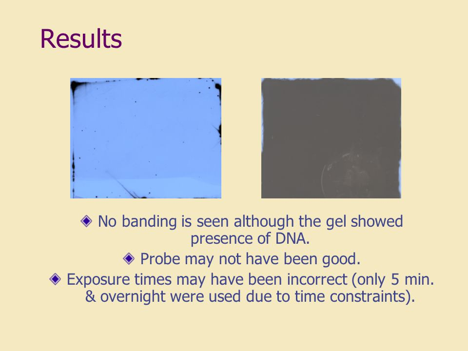 Results No banding is seen although the gel showed presence of DNA.