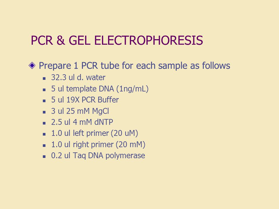 PCR & GEL ELECTROPHORESIS Prepare 1 PCR tube for each sample as follows 32.3 ul d. water 5 ul template DNA (1ng/mL) 5 ul 19X PCR Buffer 3 ul 25 mM MgC