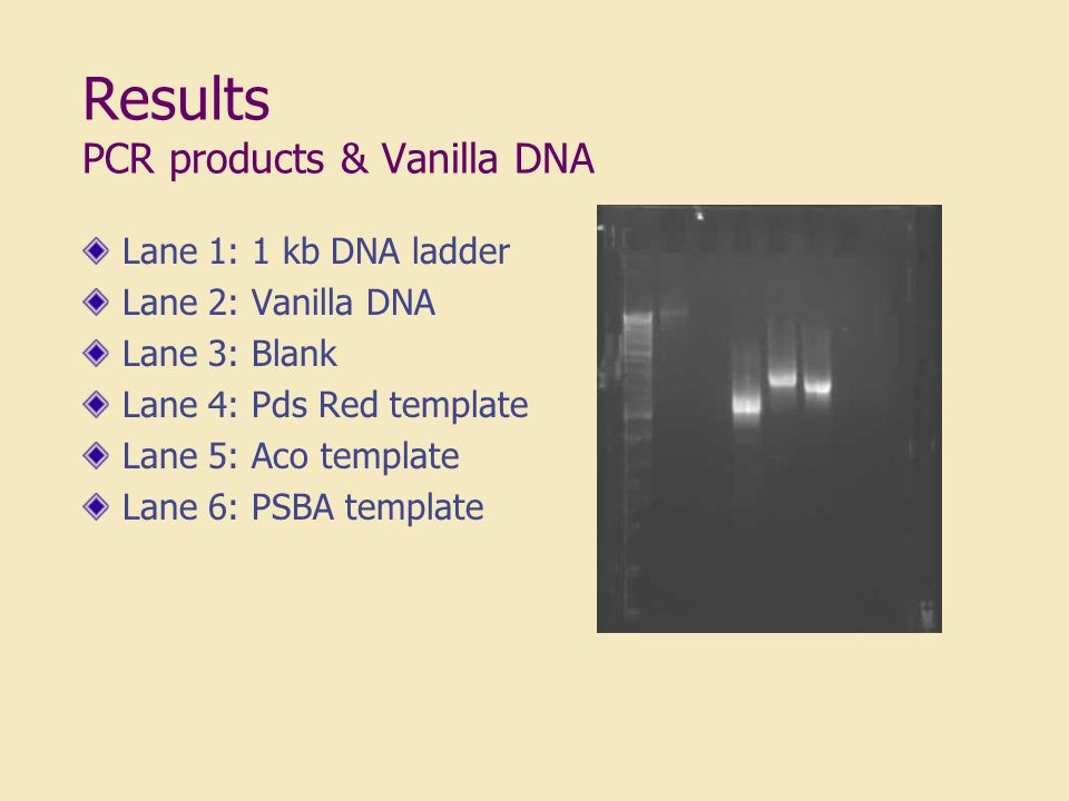 Results PCR products & Vanilla DNA Lane 1: 1 kb DNA ladder Lane 2: Vanilla DNA Lane 3: Blank Lane 4: Pds Red template Lane 5: Aco template Lane 6: PSBA template