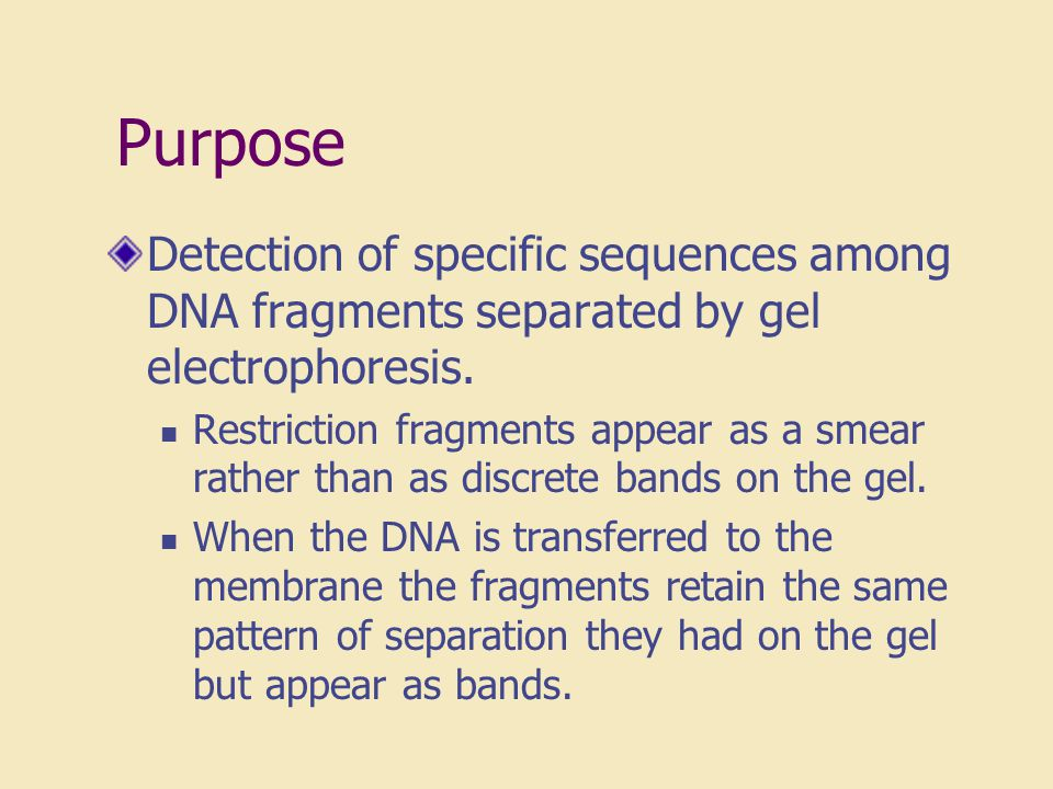 Purpose Detection of specific sequences among DNA fragments separated by gel electrophoresis.