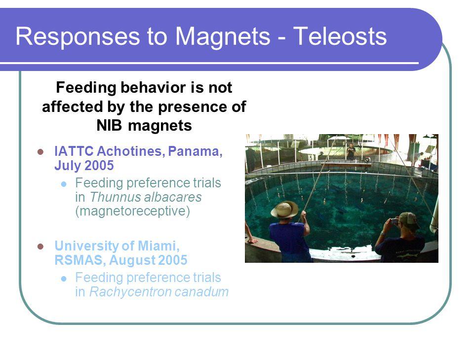Responses to Magnets - Teleosts IATTC Achotines, Panama, July 2005 Feeding preference trials in Thunnus albacares (magnetoreceptive) University of Mia