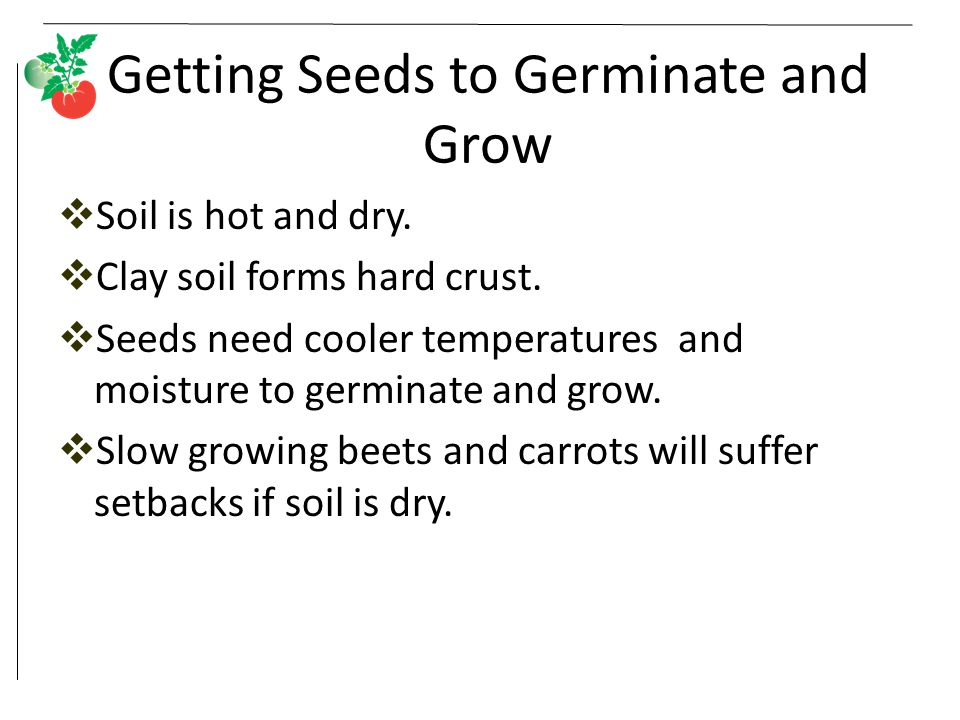Getting Seeds to Germinate and Grow  Soil is hot and dry.  Clay soil forms hard crust.  Seeds need cooler temperatures and moisture to germinate an