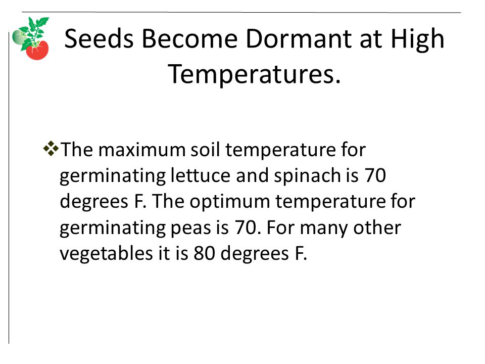 Seeds Become Dormant at High Temperatures.  The maximum soil temperature for germinating lettuce and spinach is 70 degrees F. The optimum temperature