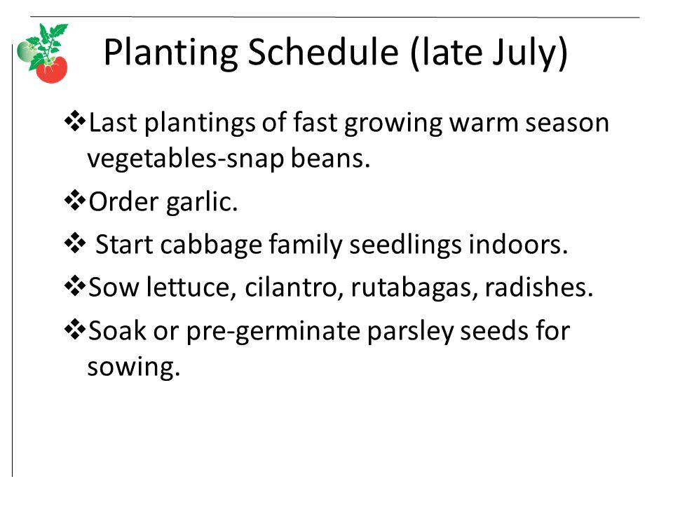 Planting Schedule (late July)  Last plantings of fast growing warm season vegetables-snap beans.  Order garlic.  Start cabbage family seedlings ind