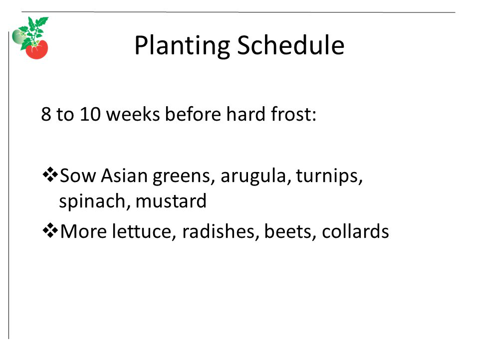 Planting Schedule 8 to 10 weeks before hard frost:  Sow Asian greens, arugula, turnips, spinach, mustard  More lettuce, radishes, beets, collards