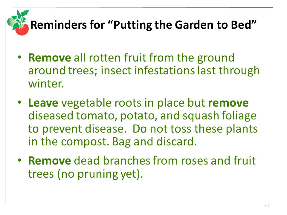 """47 Reminders for """"Putting the Garden to Bed"""" Remove all rotten fruit from the ground around trees; insect infestations last through winter. Leave vege"""