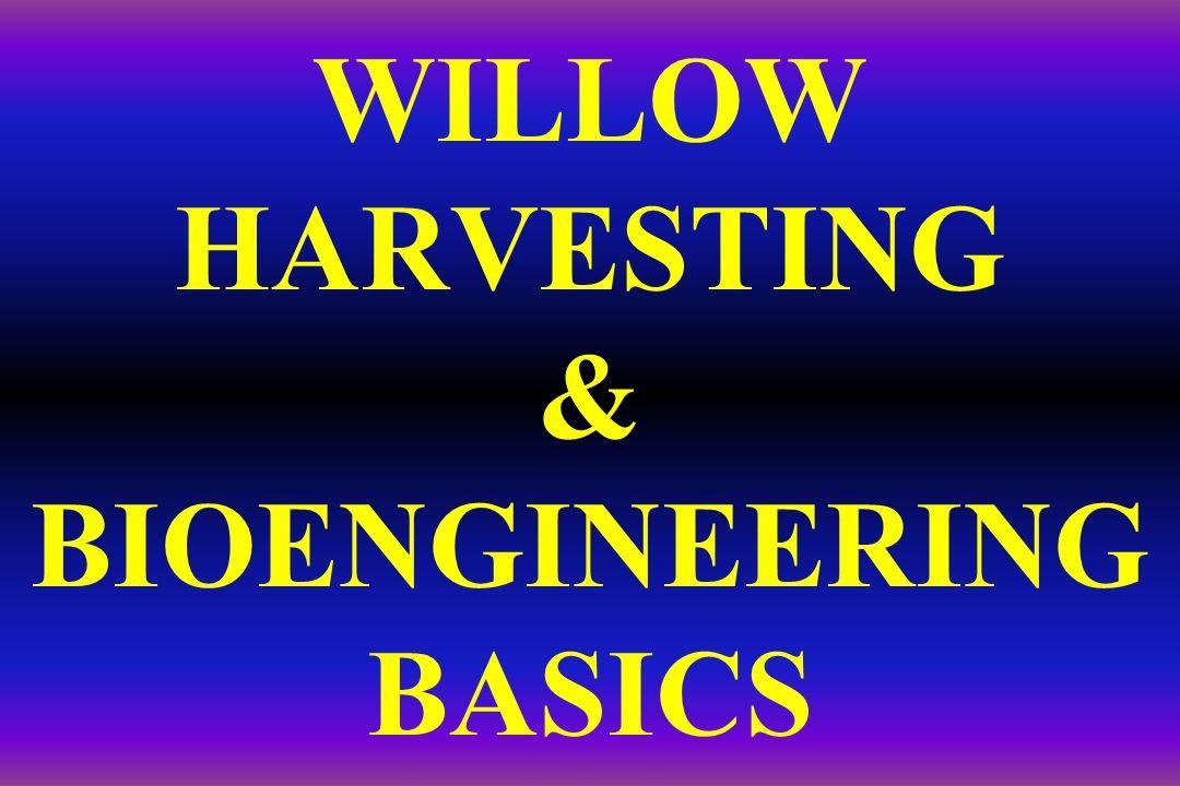 WILLOW HARVESTING & BIOENGINEERING BASICS