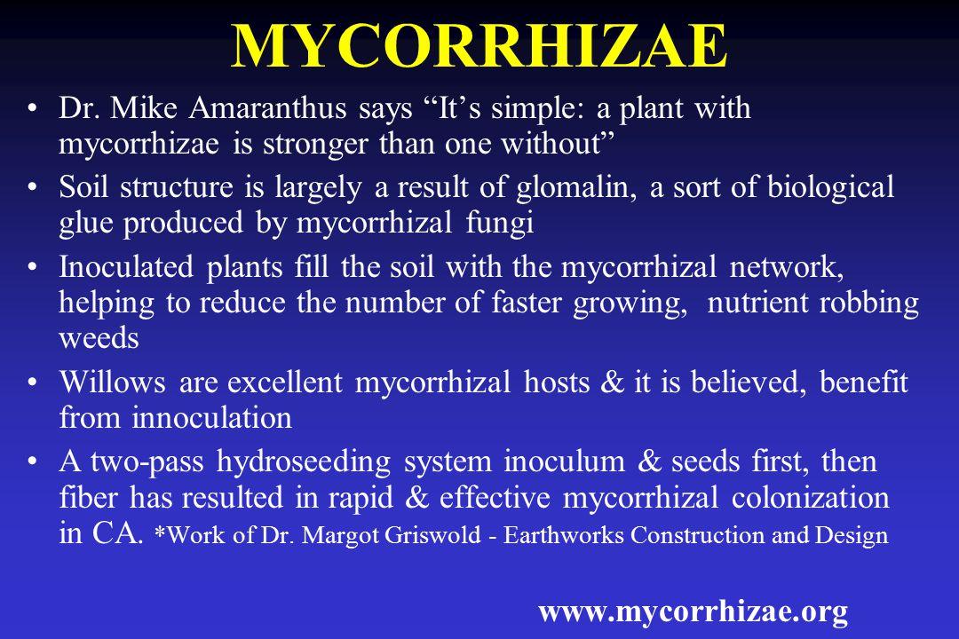 MYCORRHIZAE Dr.