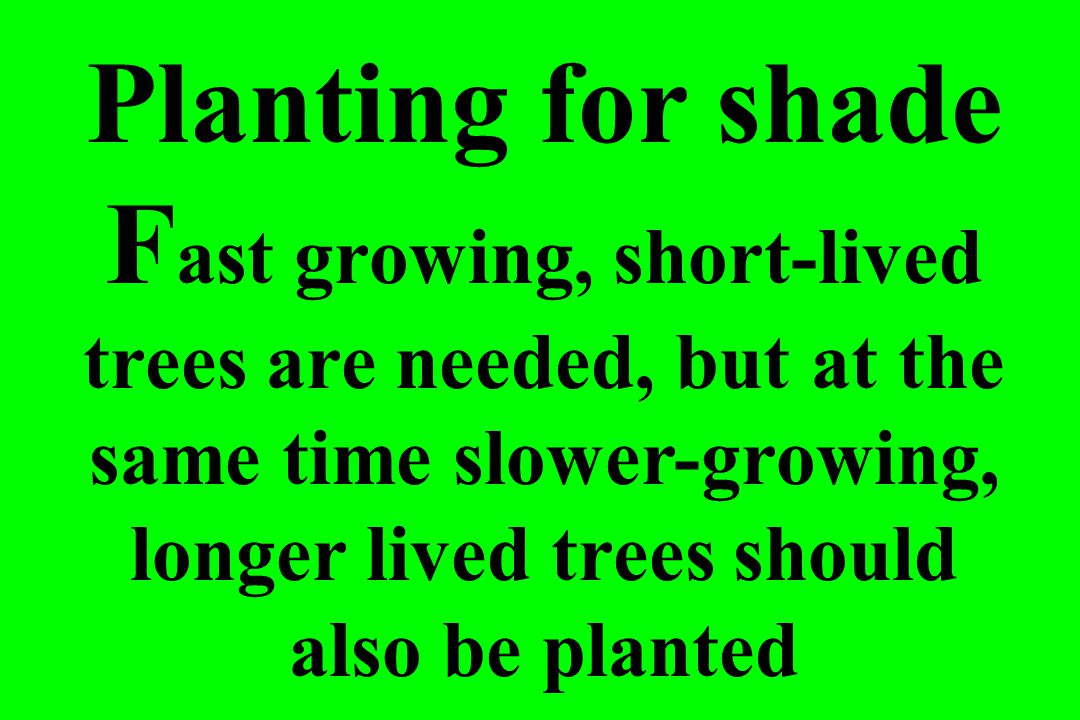 Planting for shade F ast growing, short-lived trees are needed, but at the same time slower-growing, longer lived trees should also be planted