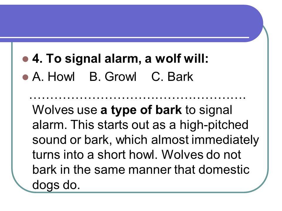 4. To signal alarm, a wolf will: A. Howl B. Growl C.