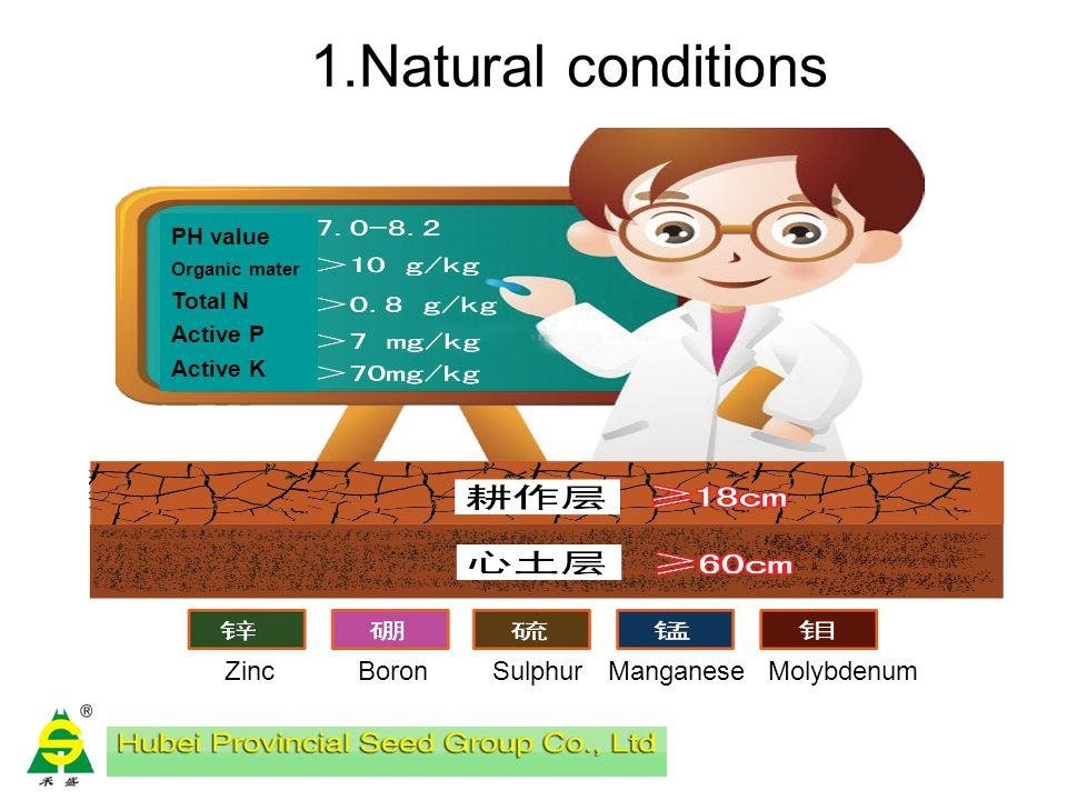 Early management and operation procedures in hybrid cotton seed production Seedbed management and roguing Transplanting Seedling stage management Bud