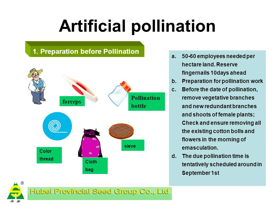 Artificial pollination Pollination time Preparation before Pollination Ways and means of emasculation and pollination Pollination notice Inspection pe
