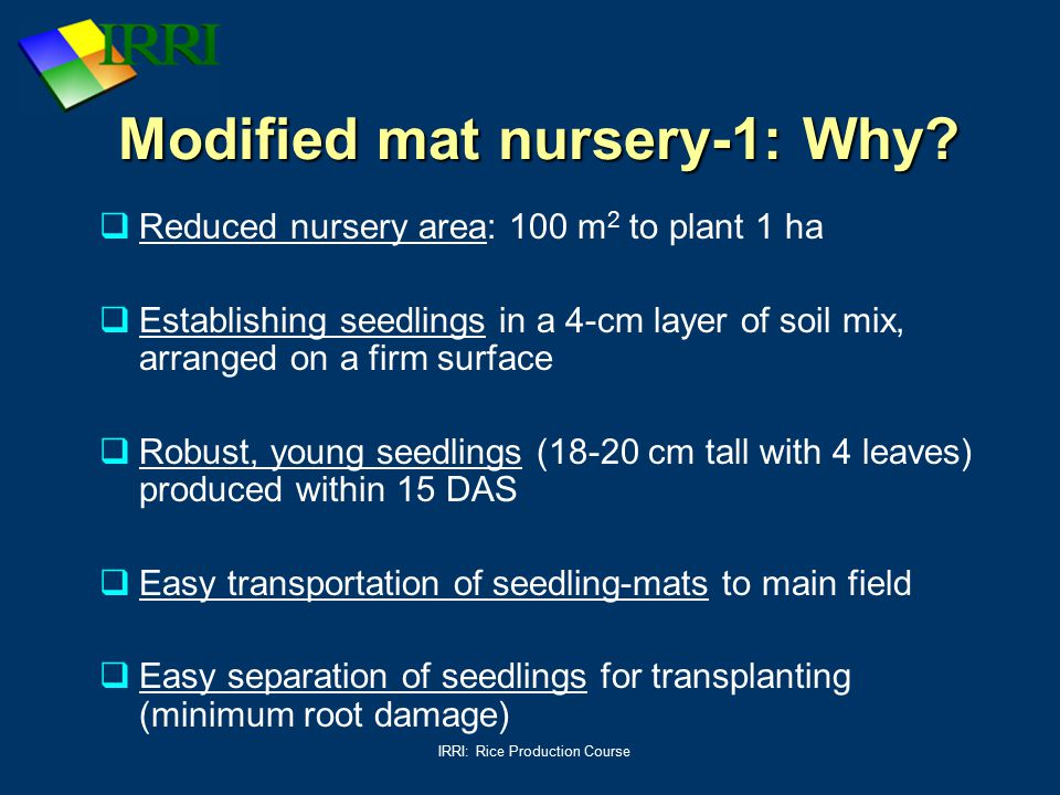 IRRI: Rice Production Course Modified mat nursery-1: Why?  Reduced nursery area: 100 m 2 to plant 1 ha  Establishing seedlings in a 4-cm layer of so