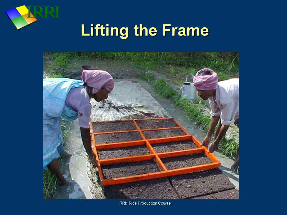 IRRI: Rice Production Course Lifting the Frame