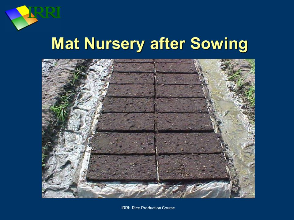 IRRI: Rice Production Course Mat Nursery after Sowing
