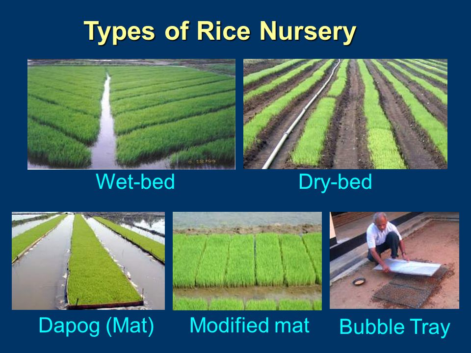 Types of Rice Nursery Wet-bedDry-bed Dapog (Mat)Modified mat Bubble Tray
