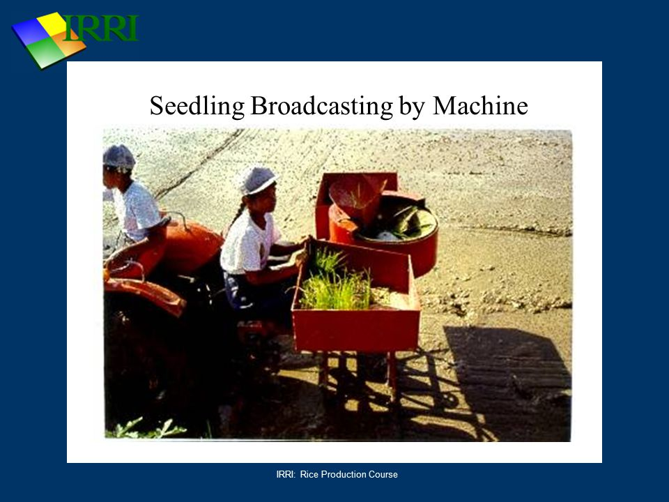IRRI: Rice Production Course Seedling Broadcasting by Machine