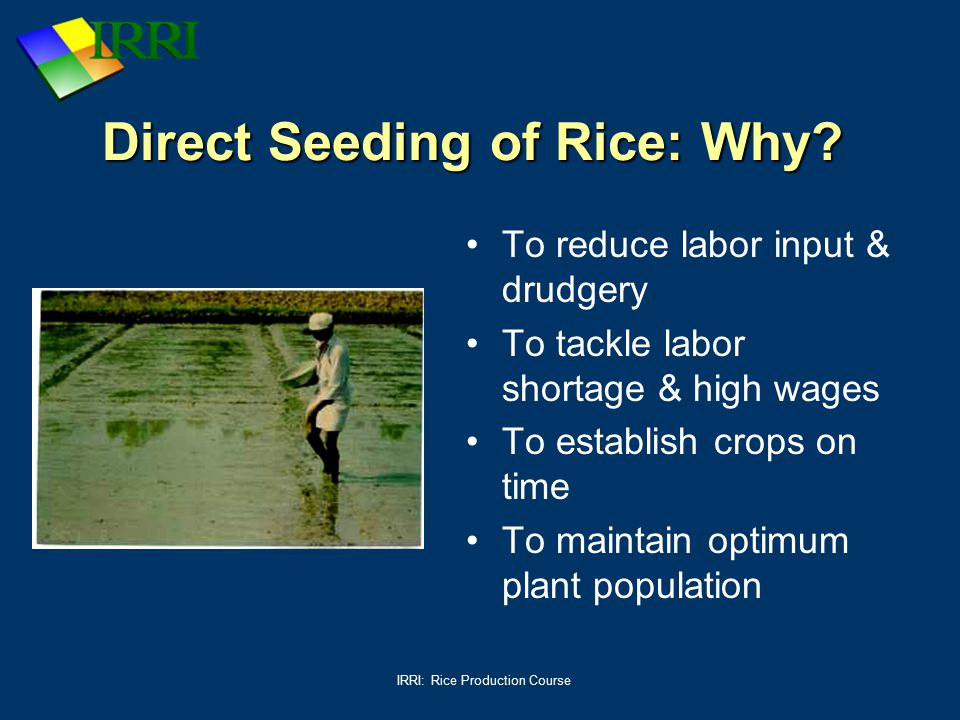 IRRI: Rice Production Course Direct Seeding of Rice: Why? To reduce labor input & drudgery To tackle labor shortage & high wages To establish crops on