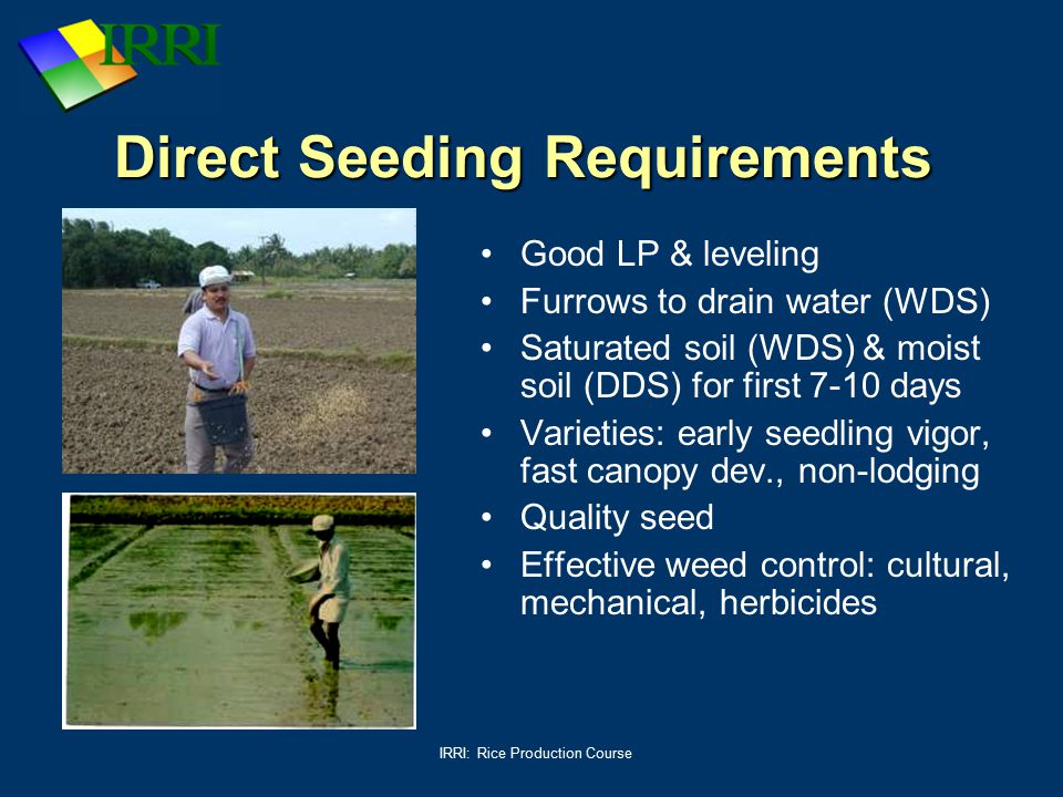 IRRI: Rice Production Course Direct Seeding Requirements Good LP & leveling Furrows to drain water (WDS) Saturated soil (WDS) & moist soil (DDS) for f
