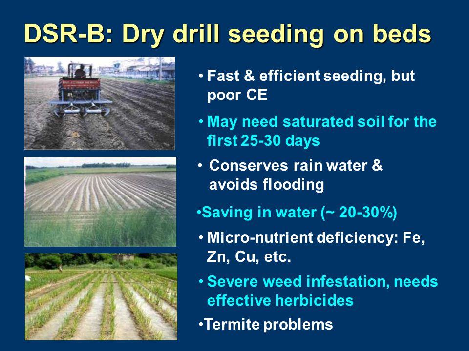 DSR-B: Dry drill seeding on beds Fast & efficient seeding, but poor CE May need saturated soil for the first 25-30 days Micro-nutrient deficiency: Fe,