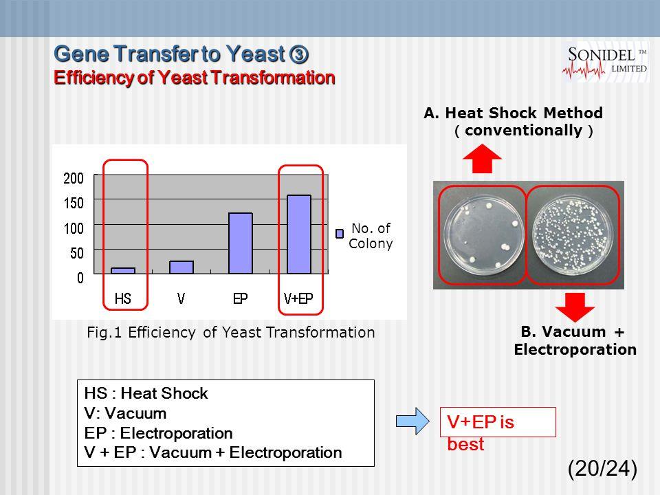 (20/24) HS : Heat Shock V: Vacuum EP : Electroporation V + EP : Vacuum + Electroporation Fig.1 Efficiency of Yeast Transformation V+EP is best A.
