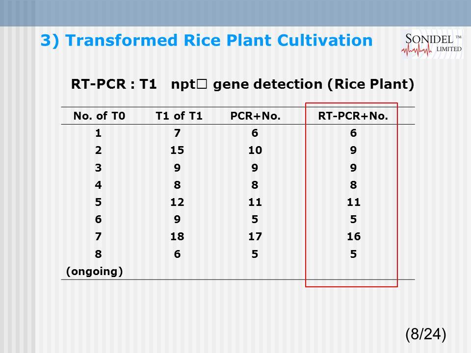 No. of T0 T1 of T1 PCR+No. RT-PCR+No.