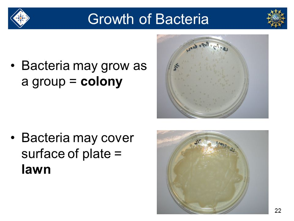 22 Growth of Bacteria Bacteria may grow as a group = colony Bacteria may cover surface of plate = lawn
