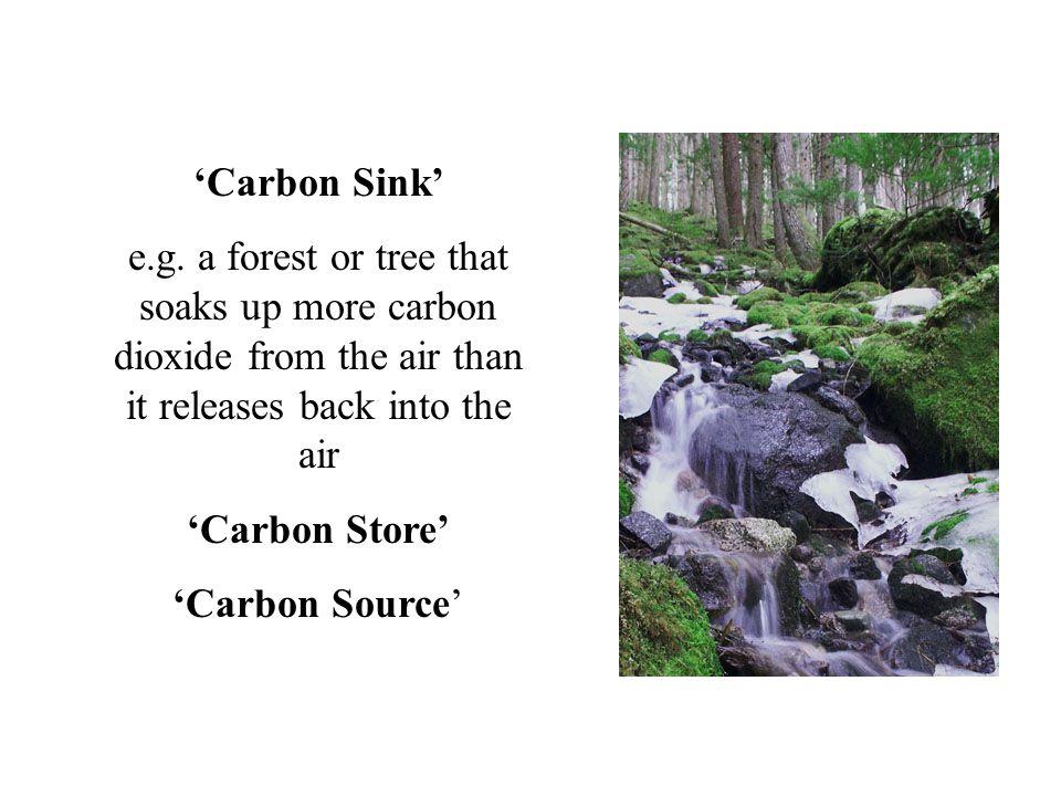 'Carbon Sink' e.g.