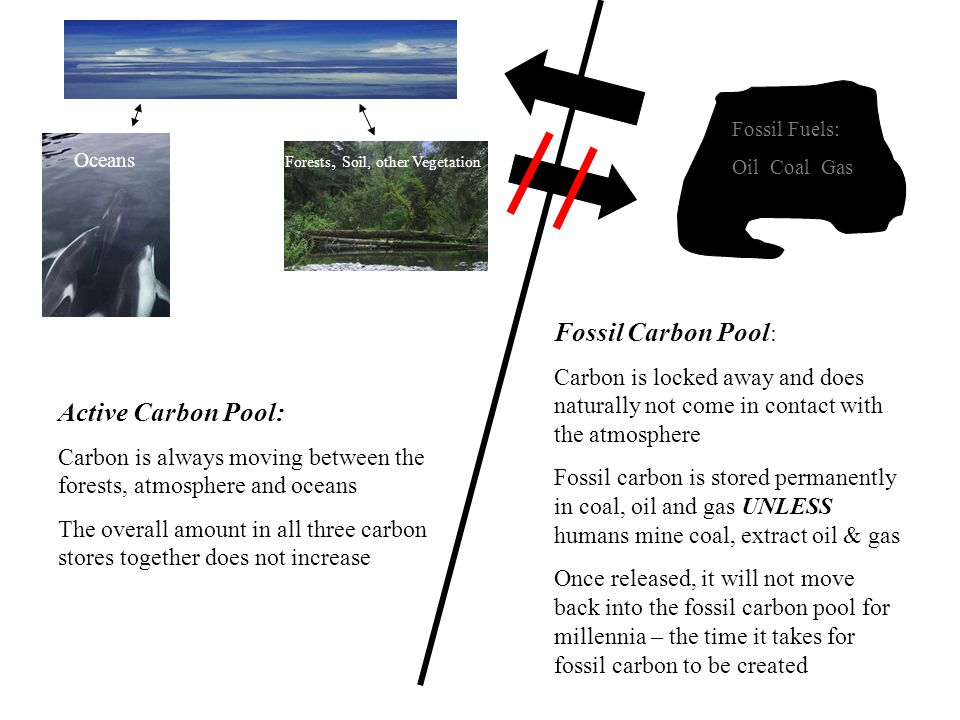 Active Carbon Pool: Carbon is always moving between the forests, atmosphere and oceans The overall amount in all three carbon stores together does not increase Fossil Carbon Pool : Carbon is locked away and does naturally not come in contact with the atmosphere Fossil carbon is stored permanently in coal, oil and gas UNLESS humans mine coal, extract oil & gas Once released, it will not move back into the fossil carbon pool for millennia – the time it takes for fossil carbon to be created Forests, Soil, other Vegetation Oceans Fossil Fuels: Oil Coal Gas