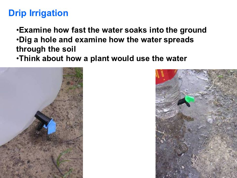 Examine how fast the water soaks into the ground Dig a hole and examine how the water spreads through the soil Think about how a plant would use the w