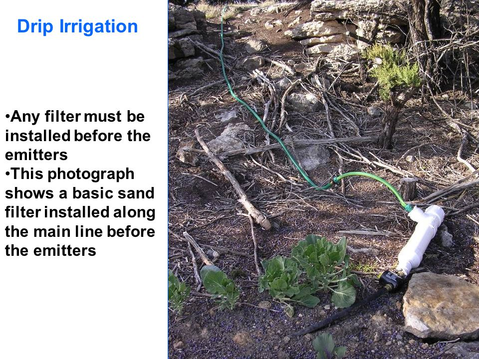 Drip Irrigation Any filter must be installed before the emitters This photograph shows a basic sand filter installed along the main line before the em
