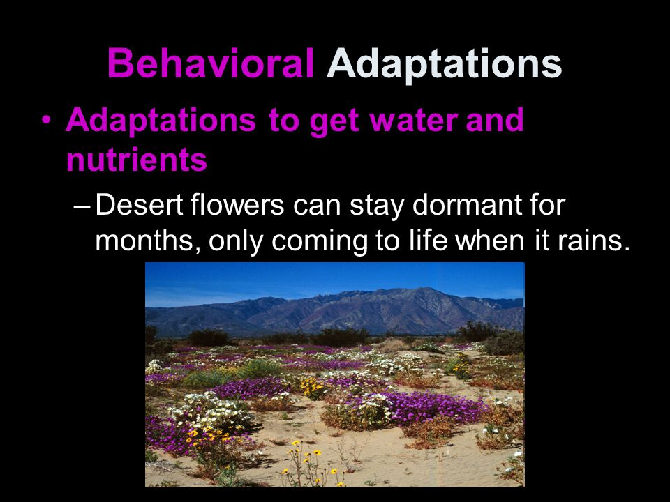 Behavioral Adaptations Adaptations to get water and nutrients –Desert flowers can stay dormant for months, only coming to life when it rains.