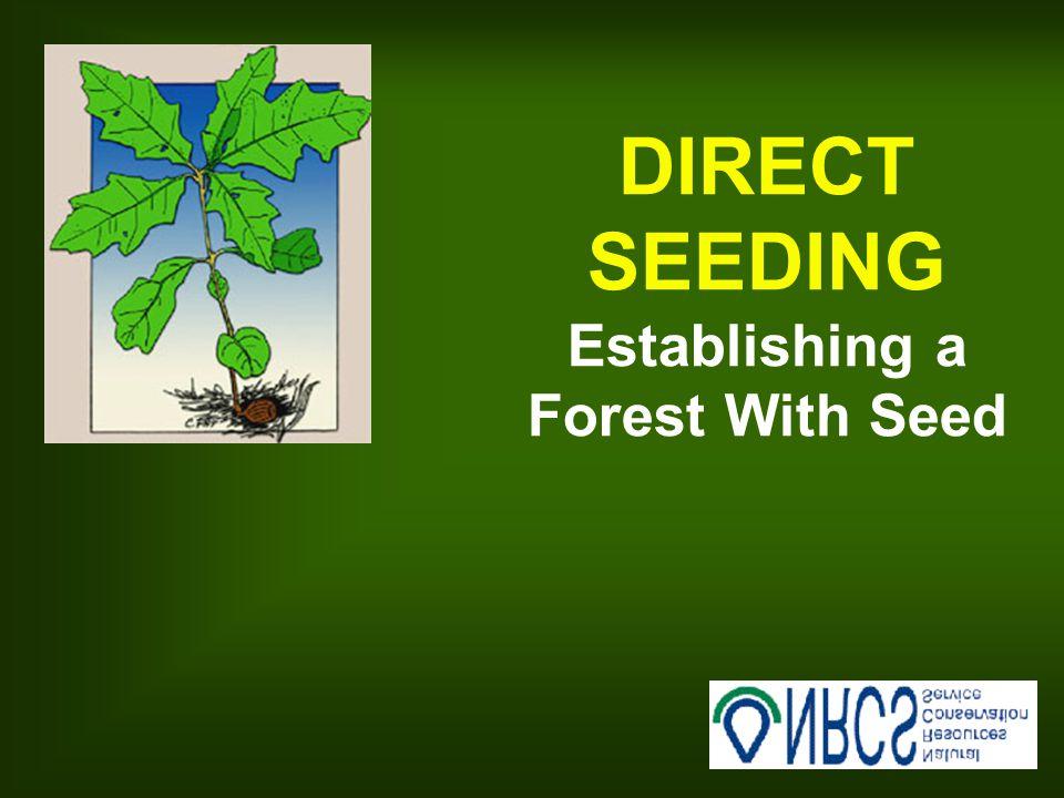 Seeding Rates--Row Seeding MINIMUM of 3,000 hard mast seed/acre At 10' row spacing, leave 16 or less between seeds Planting depth = 2X seed diameter, 1-4 , depending on species If no light seeded spp.
