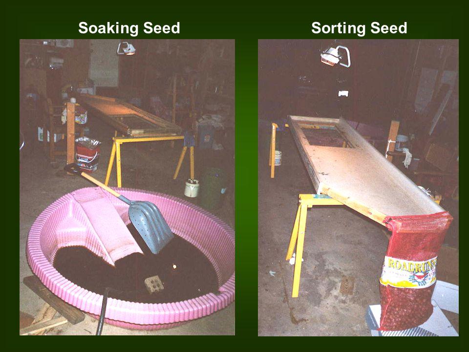 Soaking SeedSorting Seed