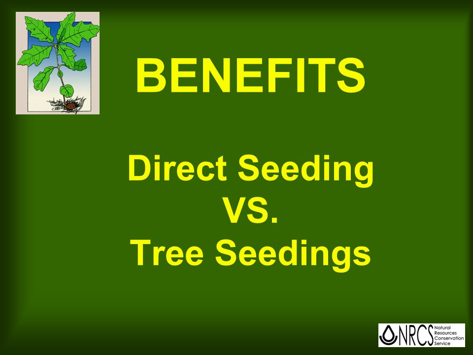 Keys to Success with Direct Seeding Use a professional Control weeds Match spp.