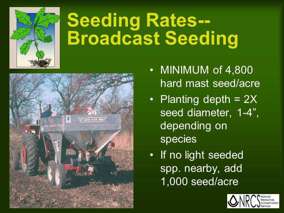 Seeding Rates-- Broadcast Seeding MINIMUM of 4,800 hard mast seed/acre Planting depth = 2X seed diameter, 1-4 , depending on species If no light seeded spp.