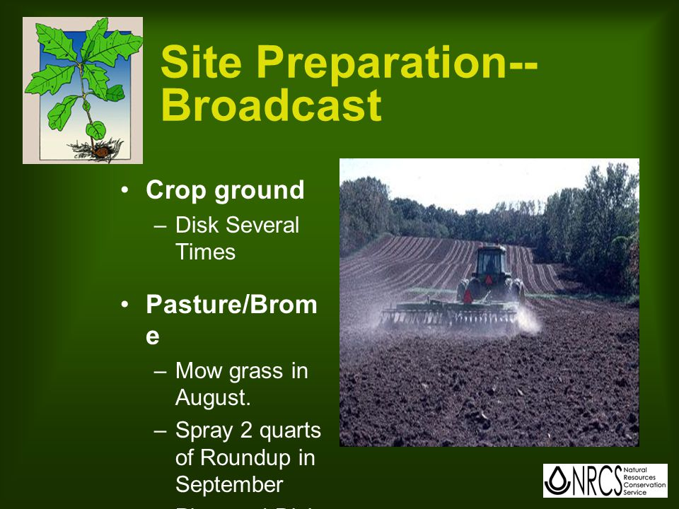 Site Preparation-- Broadcast Crop ground –Disk Several Times Pasture/Brom e –Mow grass in August.