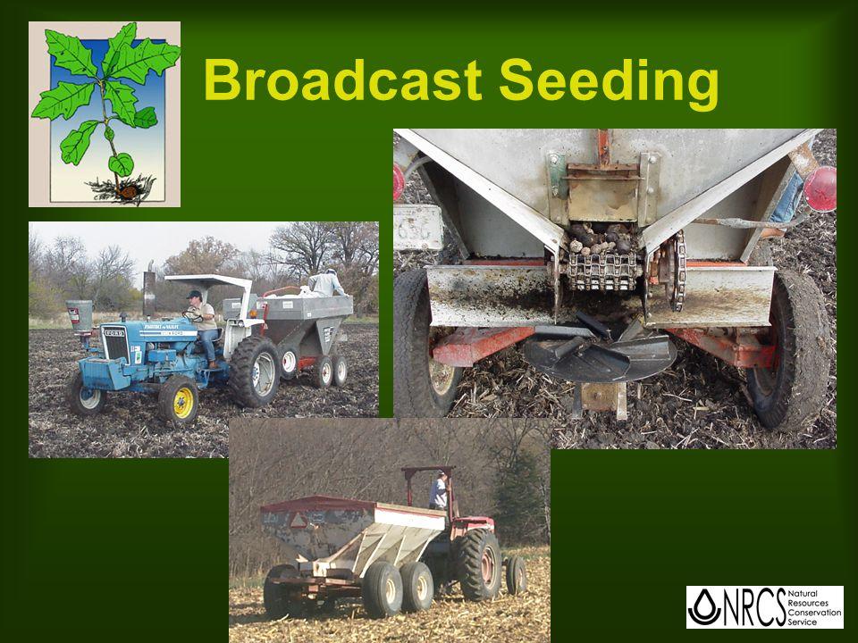 Broadcast Seeding