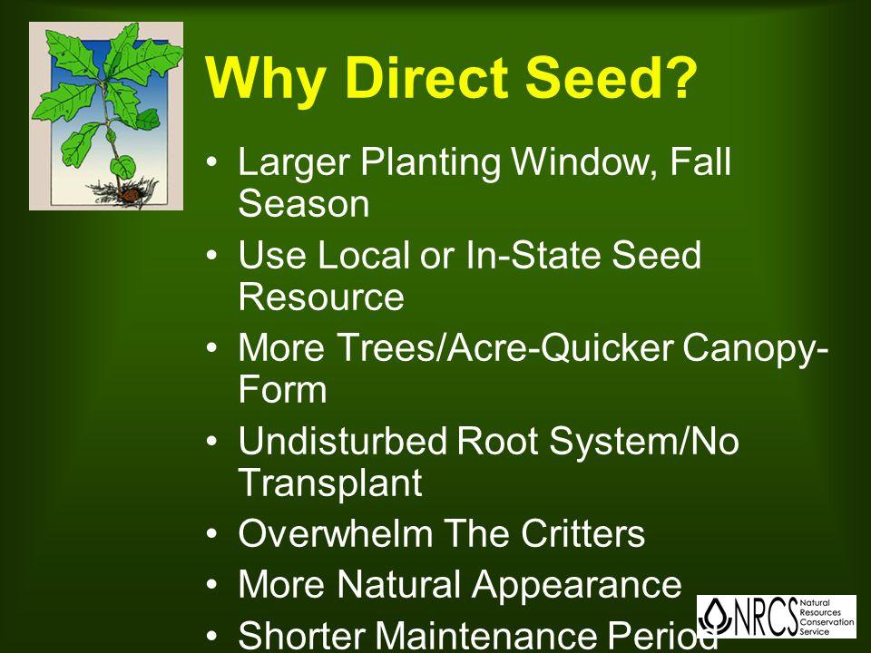 Why Plant Seedlings.