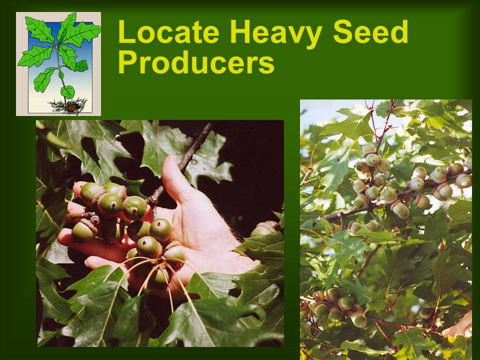 Use High Quality Seed Plant only undamaged, mature, viable seed Cut or crack test at least 10 random seeds per bushel If non-viable seed is found, increase seeding rate by the same percentage