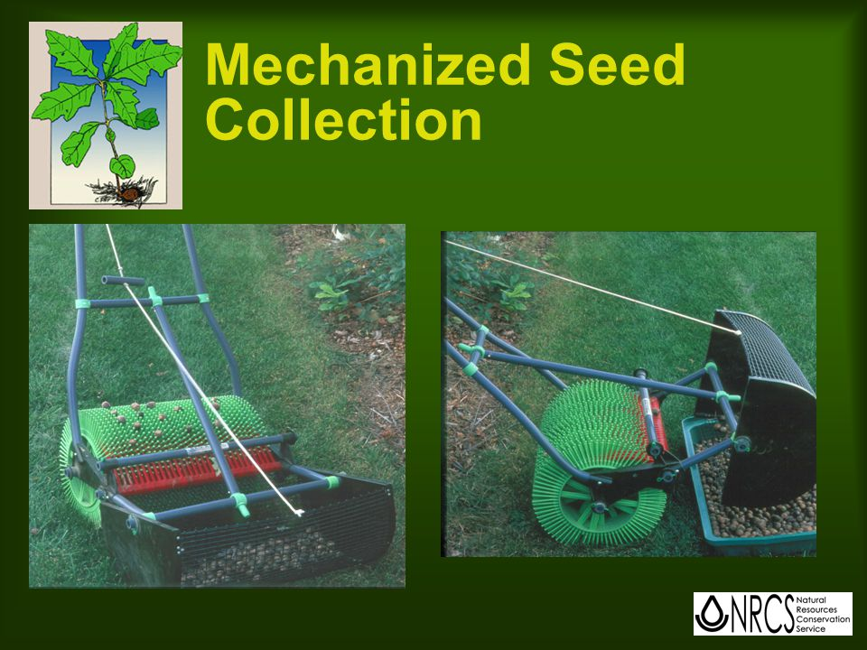 Weed Control for Direct Seeding Competition must be controlled for minimum of two years Good control of grasses and weeds is critical